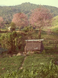 Small hut and cherry blossom on  gabbage Stock Photo