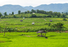 Small hut in the field. Small hut in the green step rice Royalty Free Stock Images