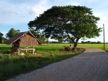 Small hut near big tree Royalty Free Stock Photography