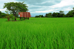 Small hut in rice farm Royalty Free Stock Image