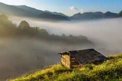 Small hut in Tea field with sunlight Royalty Free Stock Photos