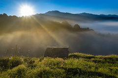 Small hut in Tea field with sunlight, mist and blue sky Royalty Free Stock Images