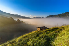 Small hut in Tea field with sunlight, mist and blue sky Royalty Free Stock Photo