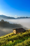 Small hut in Tea field with sunlight, mist and blue sky Stock Images