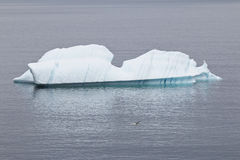 Small iceberg with gull in front, Avalon Peninsula Stock Images