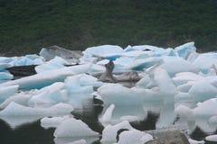 Small icebergs Stock Image