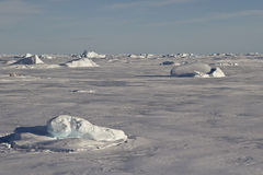 Small icebergs frozen in the ice of the Southern Ocean Stock Photo