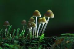 Small inedible mushrooms Stock Photo