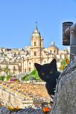 A cat on the roofs of the old city of Modica in Sicily. stock image