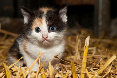 Small innocent kitten. Small innocent curious kitten in close up Royalty Free Stock Photos