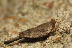 Small insect and bug Royalty Free Stock Photos