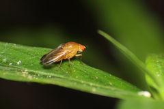 Small insect and bug Royalty Free Stock Images