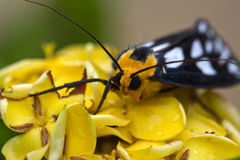 Small insect Royalty Free Stock Images