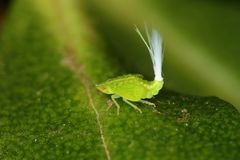 Weird insect optic  fibre bug Stock Images