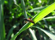 A small insect on the grass stalk Stock Photos