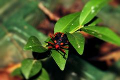 Small Insect Royalty Free Stock Photography