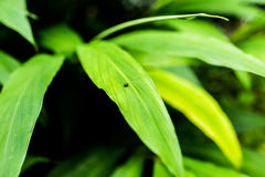 Small insect holding on green leaf. Stock Images