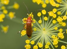 Small insect in nature. macro Royalty Free Stock Image