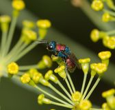 Small insect in nature. macro Royalty Free Stock Photo