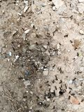 When the ants collect food. A small insect, often with a sting, that usually lives in a complex social colony with one or more breeding queens. It is wingless stock photography