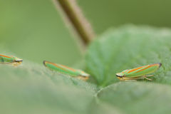 Small insects Stock Images