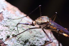 Small insects Stock Photo