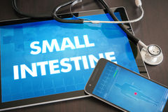Small intestine (gastrointestinal disease related body part) diagnosis medical concept on tablet screen with stethoscope.  royalty free stock photography