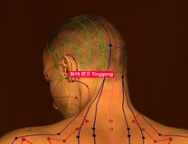Acupuncture Point SI19 Tinggong, 3D Illustration, Brown Backgrou royalty free stock image