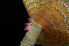 Small invertebrate. Looking food on algae royalty free stock photo