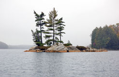 Small island. Several spruce trees in the small island Stock Photos