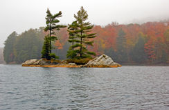 Small island. Several spruce trees in the small island Royalty Free Stock Photos