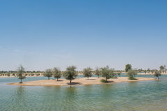 Small island at artificial lake at oasis in the desert surrounded by trees and bushes Stock Image