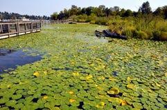 Small island with bridge Royalty Free Stock Photo