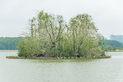 Small island Imchen in Berlin with Cormorants nesting Stock Images