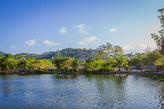 Small island with palm trees in the middle of pond Royalty Free Stock Images