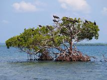 Small island with seabirds Stock Photography