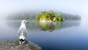 Small island and seagull in foggy morning stock photo