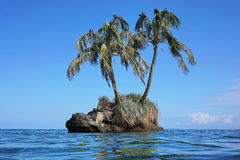 Small islet with coconut palm trees and sea birds. Small islet with two coconut palm trees and sea birds on leaves, Zapatillas island, Caribbean, Panama Royalty Free Stock Image