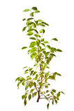 Small isolated green tree Stock Photo