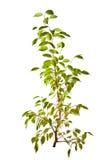 Small isolated green tree Stock Photo