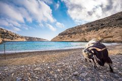 The small isolated gulf of Vathi, in Crete, with sandy beach and some lucky campers. The small isolated gulf of Vathi, in Crete, with sandy beach and some lucky Royalty Free Stock Image