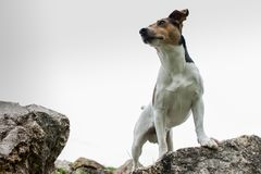 PORTRAIT OF SMALL DOG STANDING ON ROCK. stock photo