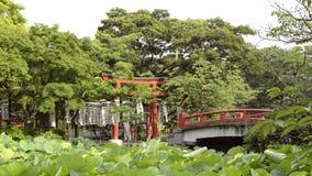Small Japanese shrine on an lake island stock video footage