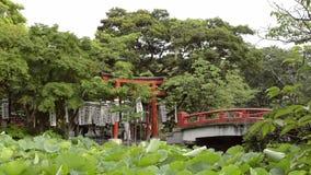 Small Japanese shrine on an lake island stock footage