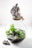 Small jar with live forest Royalty Free Stock Photos