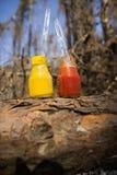 Small jars of ketchup and mustard Royalty Free Stock Images