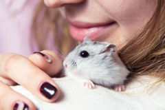 Small Jungar hamster on the shoulder of a woman Royalty Free Stock Images