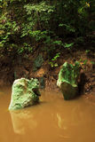 Small jungle river in borneo Royalty Free Stock Photography