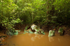 Small jungle river in borneo Royalty Free Stock Images