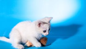 Lovely kitten playing with toy mouse Royalty Free Stock Photo